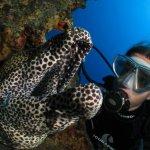 Bilder Mauritius Unterwasser SeaUrchin UW Pics Mauritius SeaUrchin Diving Center Gallery