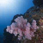 Korallen Unterwasser Mauritius