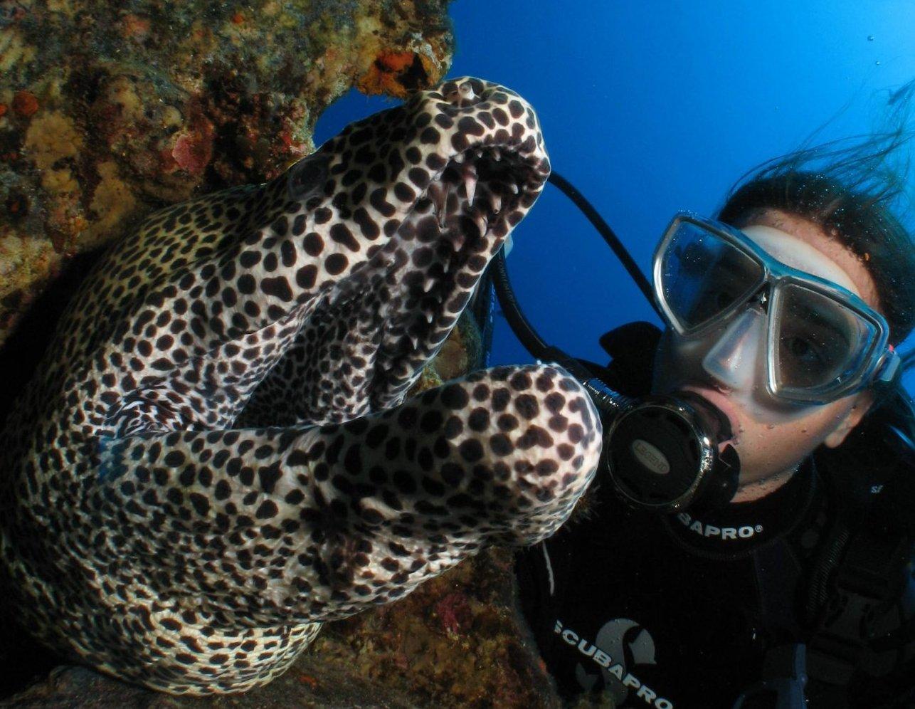Galerie de photos sous marine Bilder Mauritius Unterwasser SeaUrchin UW Pics Mauritius SeaUrchin Diving Center Gallery