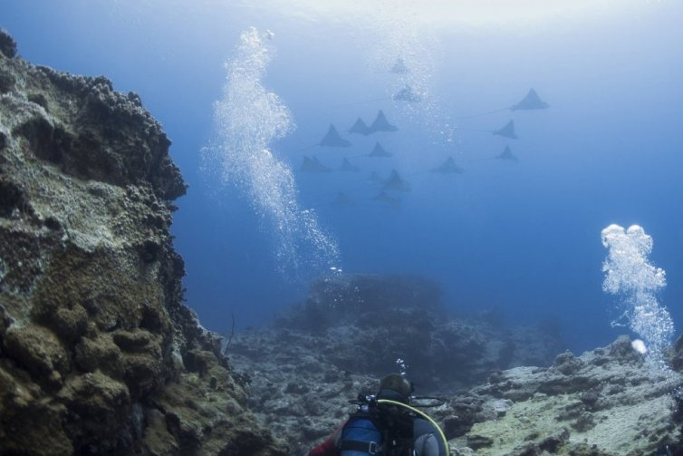 Mauritius And It's Dive Sites