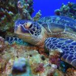 must-watch ocean documentations